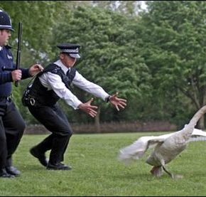 What's Goin' On in the 'Burbs? Hot Fuzz!