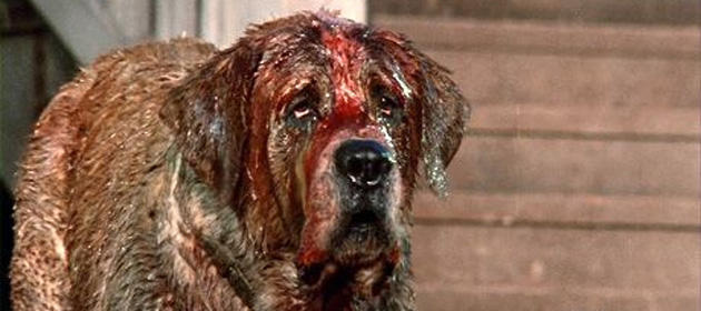 Cujo-is-one-scary-monster
