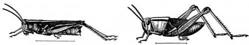 grasshopper-sketch